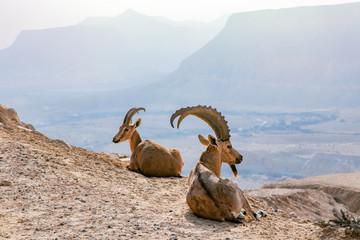 Morning In Negev Desert