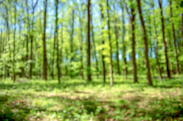 Wall Murals Forest Spring forest background out of focus