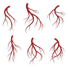 Human veins, red blood vessels realistic vector medical illustration
