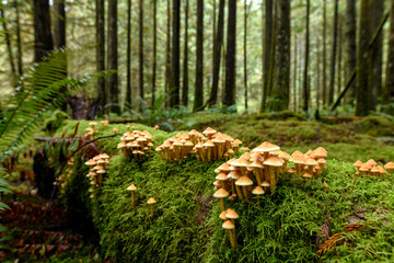Lush vegetation, thick underbrush and fungi colony on giant tree trunk in the Golden Ears Provincial Park, British Columbia, Canada