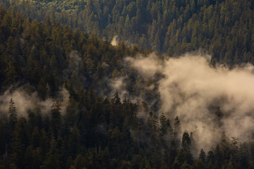 Fog through Trees