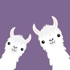 Llama alpaca animal set. Face neck. Fluffy hair fur. Cute cartoon funny kawaii character. Childish baby collection. T-shirt, greeting card, poster template print. Flat design. Violet background.