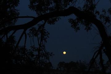 tree framed full moon