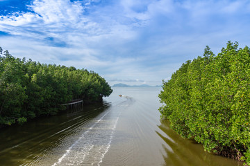 Chomphon, Thailand : October 23, 2018 - Mangrove forest along the river, beautiful nature view.