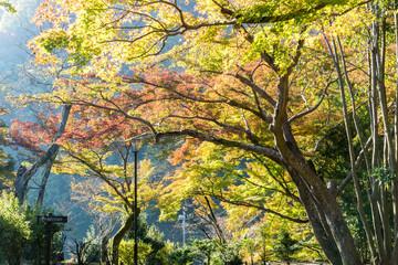 Trees Exhibit Autumn Colors in Kyoto, Japan