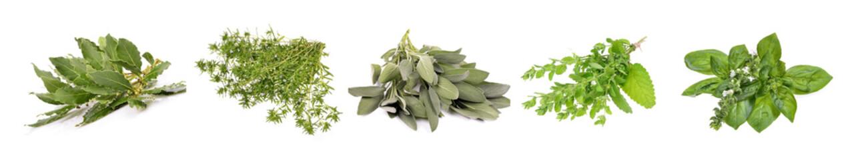 Fototapeta Set of fresh herbs hanging  on an isolated white background obraz