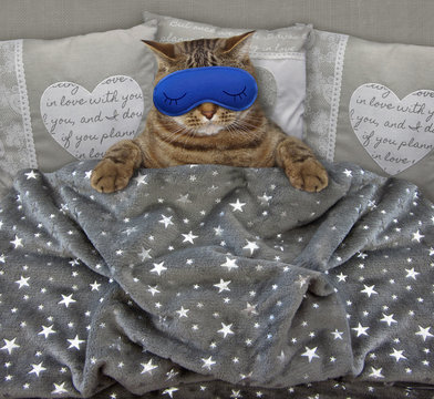The cute cat with a blue funny sleep mask is in the bed.