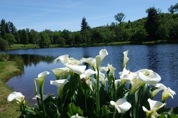 Foto auf Acrylglas Blumenhändler bloemen aan het meer