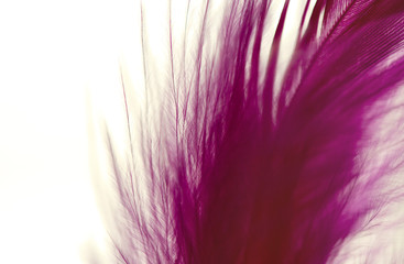 Close up of pink and purple feathers, fluffy dreamy background textures.