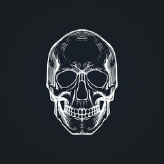 Vector illustration of skull in engraving style. Day of the Dead background. Design for invitation, greeting card.