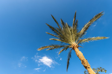 Palm Tree on a Blue Sky with Clouds - Egypt Africa