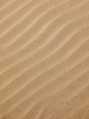 Sand texture.Dented wave of the blow of the wind
