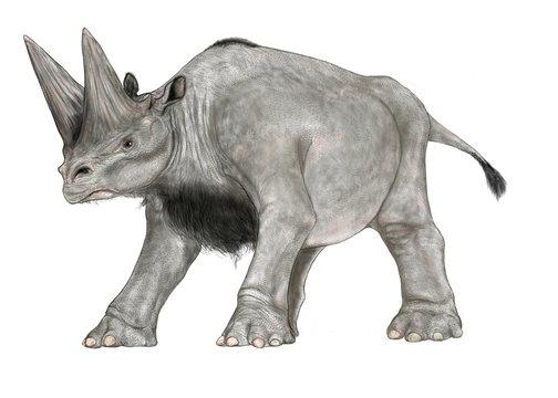 四肢を踏ん張った状態のアルシノイテリウムのイラスト 古代の植物食性哺乳類。古第三紀、約3,500万年前~約2,300万年前のアフリカに生存した有蹄哺乳類の一種。外形は現代のサイに似ているがむしろ象や海生哺乳類のジュゴンなどに近似する。異様に大きな角は内部が空洞で角の表面には血管が走っていたと思われる痕跡があり、皮膚に覆われていたと考えられる。
