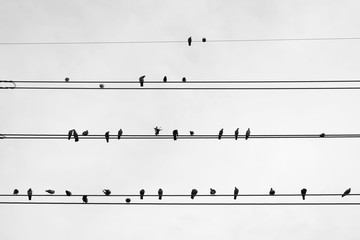 Silhouette three pigeons are resting on electric wire