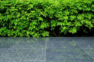 green leaf bush with tile floor in park