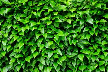 leaf and bush plant wall