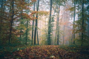 Magic autumn forest, romantic, misty, foggy landscape