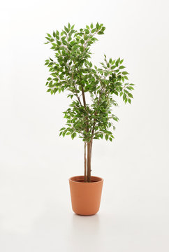 Green plant and brown vase of plant white background style.