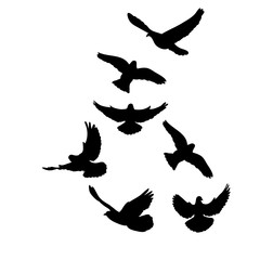 silhouette of flying birds on white background