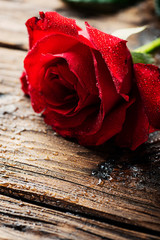 Wall Mural - Amazing red rose