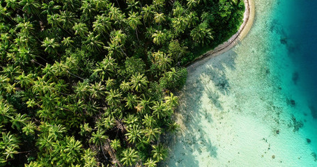 palm forest with lagoon in aerial view