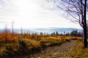Foliage colors in Polish Beskidy mountains, Beskid Slaski, Poland