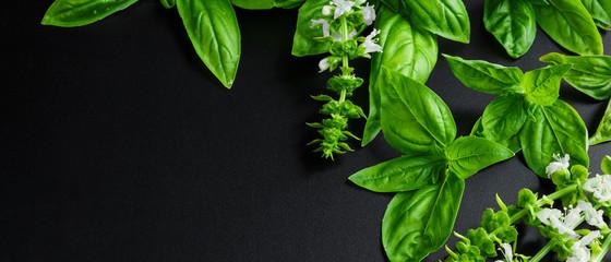 Fresh basil on a dark background. Green basil.  Food background. A lot of basil. Long banner Fototapete