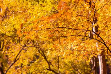 鮮やかな紅葉の木
