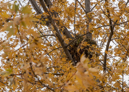 squirrel nest is visible in your tree