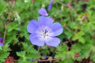 Una flor violeta