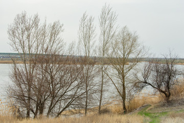 River Bank near the village.