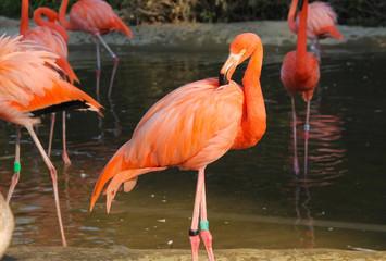 orange flamingo in contrast with dark background