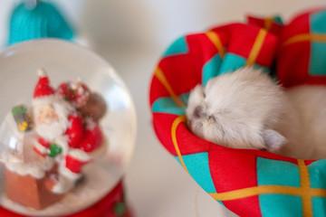 Gatinho dorme no natal