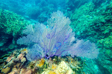 Beautiful blue corals on reefs