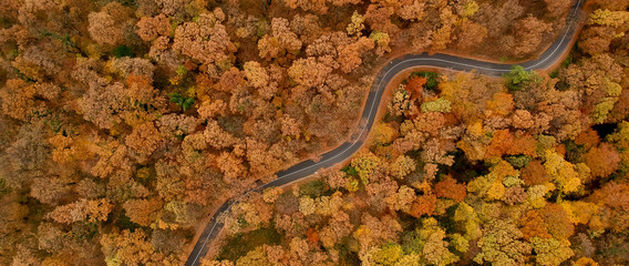 Aerial view at the road in autumn forest