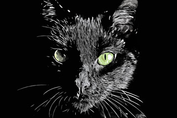 Cat face vector black and white realistic hand-drawn scratchboard style illustration
