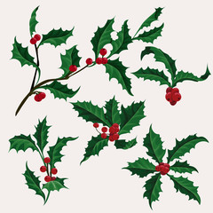 Holly vector clip art set of 5 Christmas plant with berry, winter holiday illustration