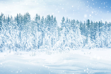 Winter landscape with falling snow on forest trees