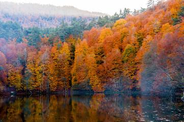 Yedigoller National Park, Autumn views. Bolu, Turkey..