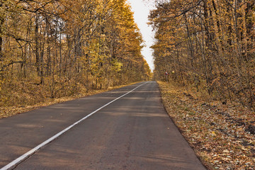 Asphalt road in the midst of autumnal deciduous forest