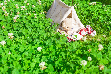 Teddy Camp at Nature / Small miniature tent at meadow of clover grass, cute little teddy bear inside, enjoy camping at summer day by reading book (copy space)