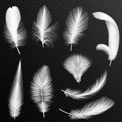 Vector realistic white feathers collection. Set of fluffy feathers, isolated on alpha transparent background.