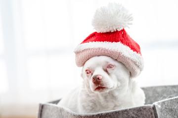 Hund mit Weihnachtsmütze - Weihnachtsgrüße