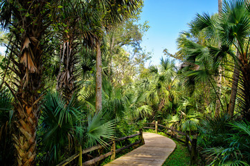 Wooden boardwalk in the recreation area in the Ocala National Forest located in Juniper Springs Florida