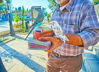 Fortune seller with birds in Shiraz, Iran