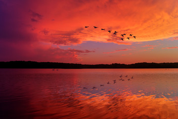 Stunning Sunset Sky Reflected on Relaxing Lake With Canadian Geese Flying Overhead