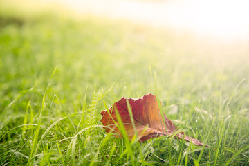Autumn leaf on the grass .Closeup with bokeh