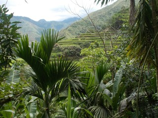 Rice Terraces in Mayoyao