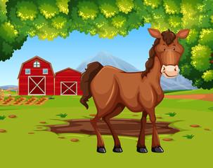 Horse in the farmland