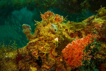Coral growth on scaffold wreck off Fort Lauderdale Florida